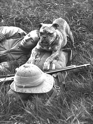 WWI UK Sentry Dog: These dogs stayed with one soldier or guard and were taught to give a warning sound such as growling or barking when they sensed a stranger in the area or close to camp.