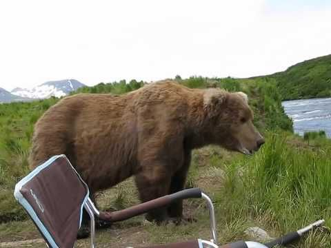 Camper Has Incredible, Up-Close Encounter With An Alaskan Brown Bear