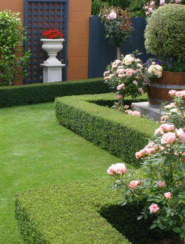 Image result for lonicera low hedging