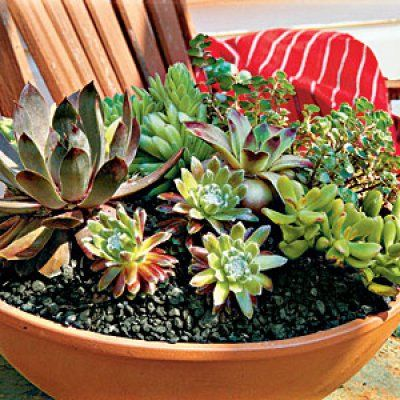 how to plant succulents in containers to be summer vacations and vacations. Black Bedroom Furniture Sets. Home Design Ideas