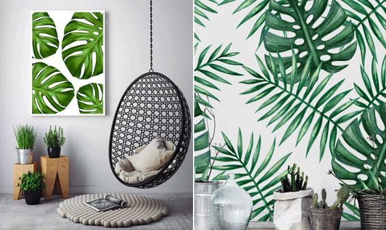 Costela-de-Adão - a planta que se tornou tendência ~ Decoração e Ideias - casa e jardim