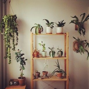 wall of plants / abby aguirre