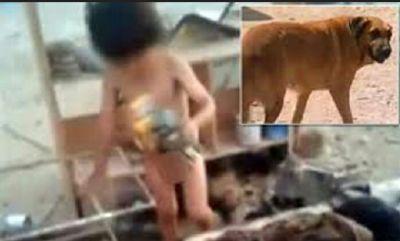 Kasihan, Ditelantarkan Orang Tuanya Bocah Ini Menyusu Pada Anjing Hamil | Wow Kece Badai !