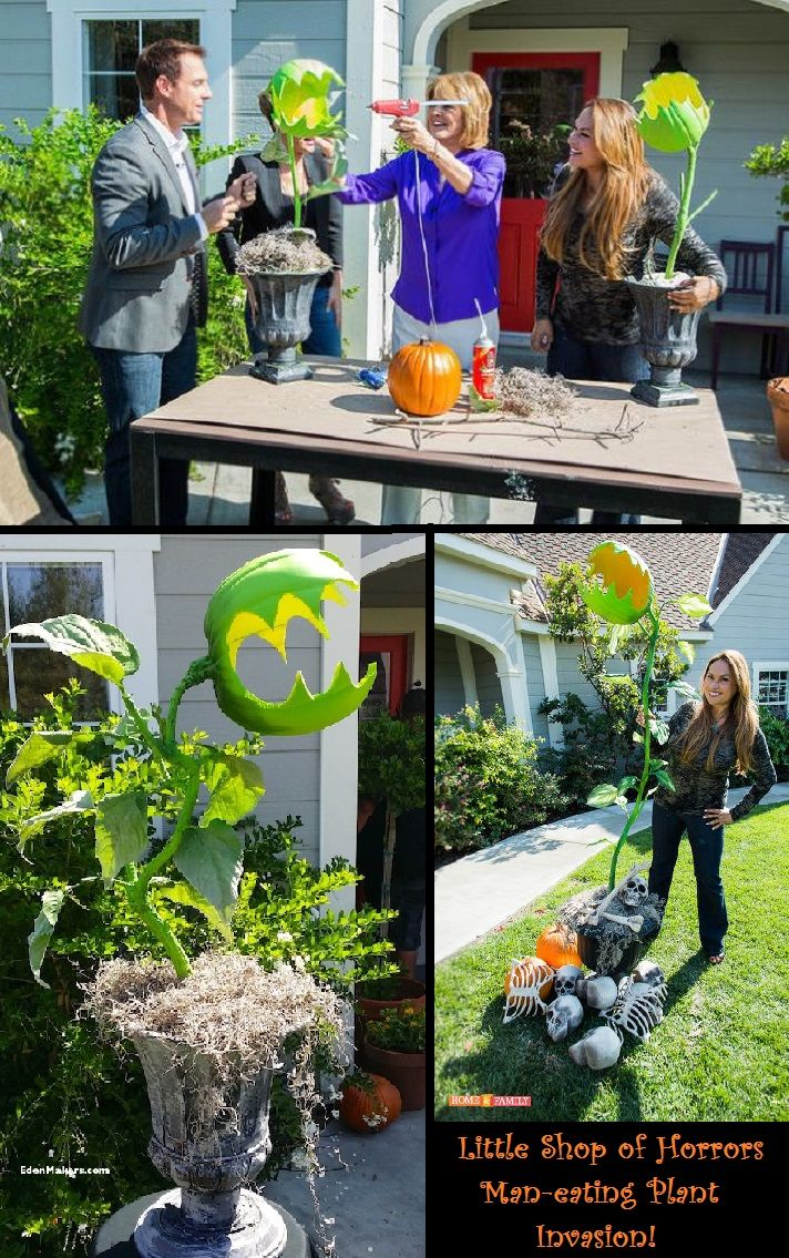 Man-Eating Monster Plants - seen on the Home & Family Show with Shirley Bovshow - Materials:  1. Faux Pumpkin (hollow) and  branch for stem (as long or short as you prefer).  2. Urn or other container. 3. Spray insulation foam.  4. Spray paint.  5.Glue gun and spray glue.  6. Silk  leaves.  7. Moss and other Decorative materials (bones, spiders, etc.) -- Please visit Shirley Bovshow's EdenMakers Blog for detailed information, video and more photos…