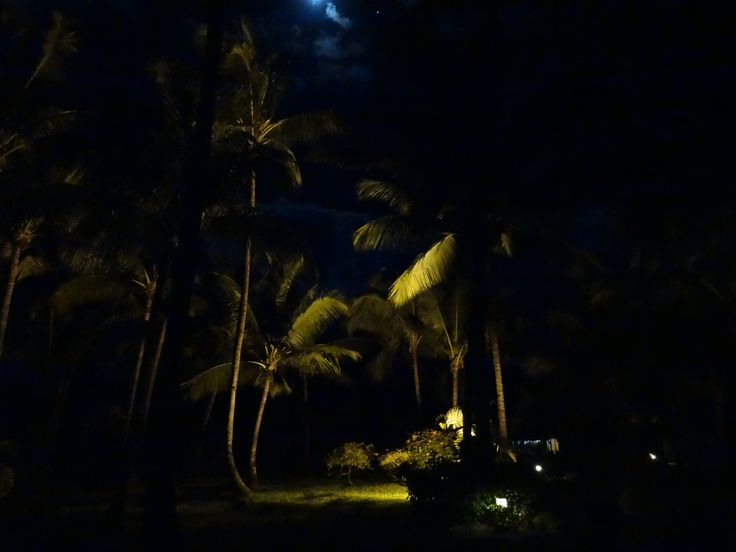moonlight and coconut trees, Mauritius