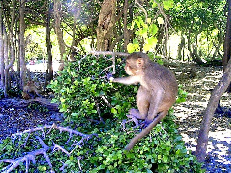 Cát Bà với hệ thực vật, động vật phong phú và nguyên sơ là điểm tham quan không thể bỏ qua khi du lịch đảo Cát Bà.