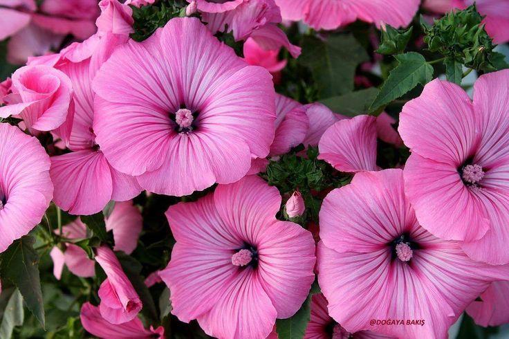 Güzel Çiçekler .