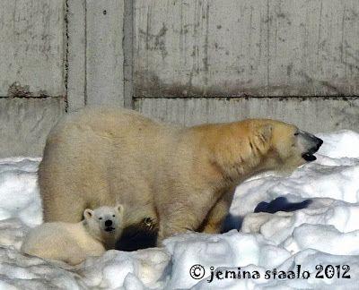 Jemina Staalon Veden vuosi 2: Jääkarhunpennun kuvia ja linkkejä: