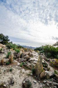 mountain  rocky road... camino rocoso ......
