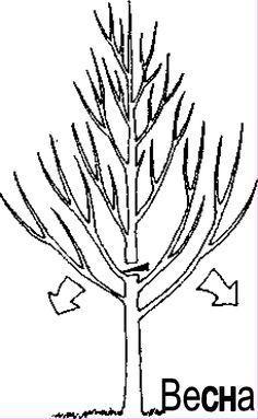Супер статья!!!!! Исправляем существующее дерево, превращая его в идеальное!
