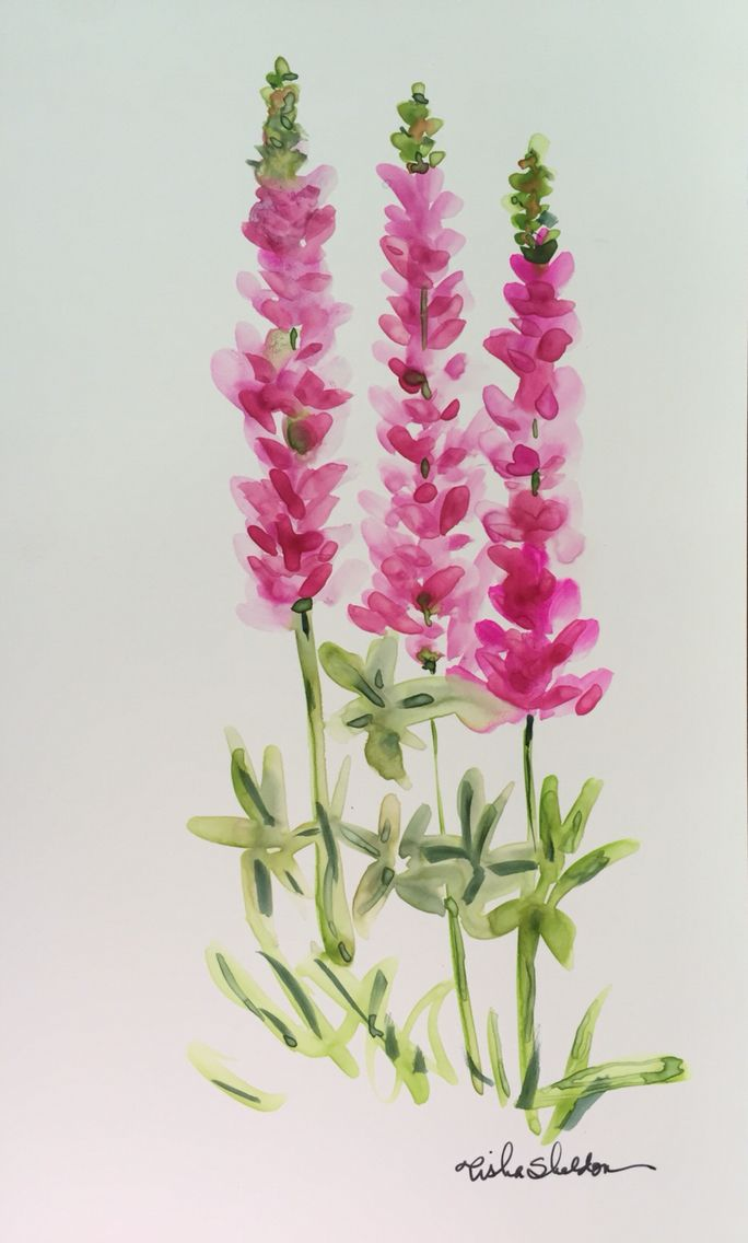 Maine Lupine on Yupo Paper. Watercolor by Tisha Sheldon