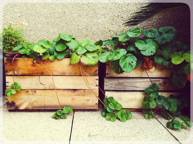 Las cajas no sólo sirven para mantener el orden sino que podemos poner nuestras plantas en ellas.