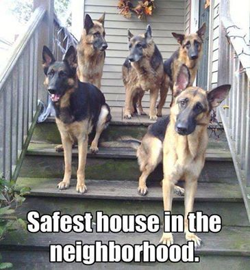 Good Dogs won't let the solicitors near the doorbell, either!