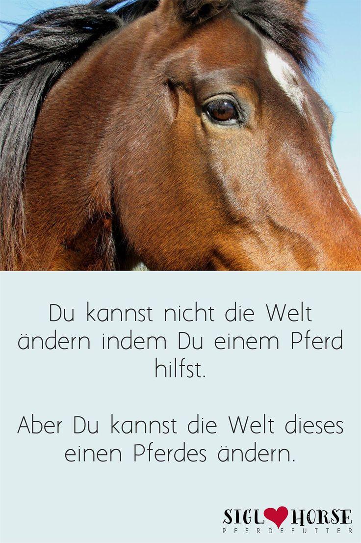 49 besten pferde lebensweisheiten bilder auf pinterest lebensweisheiten pferde zitate und deutsch. Black Bedroom Furniture Sets. Home Design Ideas