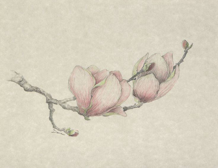 Floral Japanese Magnolia Print - Floral Illustration Series by Danabordelonfineart on Etsy