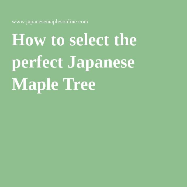 CHART JAP MAPLES   How to select the perfect Japanese Maple Tree