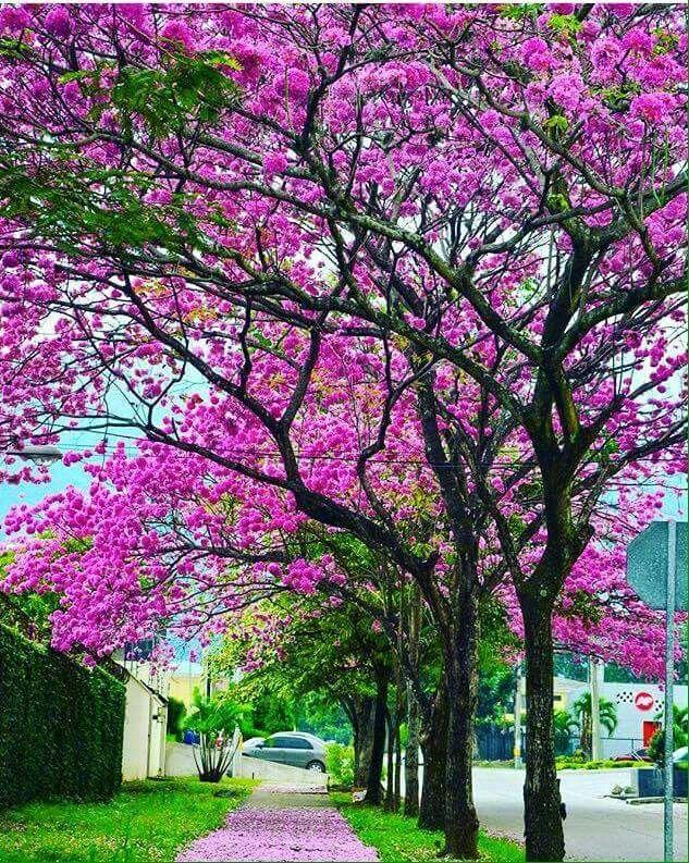 Mejores 38 im genes de casas en venta en tegucigalpa en for Fachadas de casas modernas en honduras
