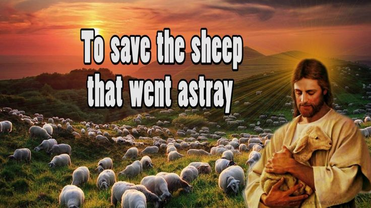 "Short Lesson: "" A Shepherd for You"""