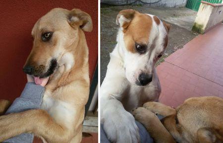 MASCALUCIA (CT): SMARRITI DUE CANI, BIA (MARRONCINA) E PLUTO (BIANCO) http://terzobinario.blogspot.it/2015/05/mascalucia-ct-smarriti-due-cani-bia.html