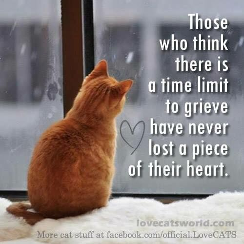 So very true.....I was heartbroken in 2012 when we lost our beloved Angel Cleo, at the young age of 14. It was unexpected, we thought to have many long years more with her. I was so heartbroken, Mika wouldn't come near me. I think she knew I was grieving. But the next year we moved to a much Smaller place. We waited for hours she in her carrier, me in the only chair. I forgot to bring cat food, all I had was a tiny dish for water and a bag of treats. I knew she was hungry, finally I crawled…