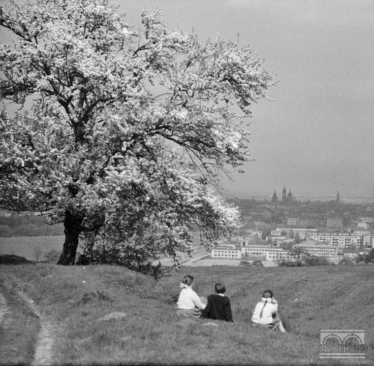 Okolice Kopca Kościuszki, drzewo, panorama Krakowa