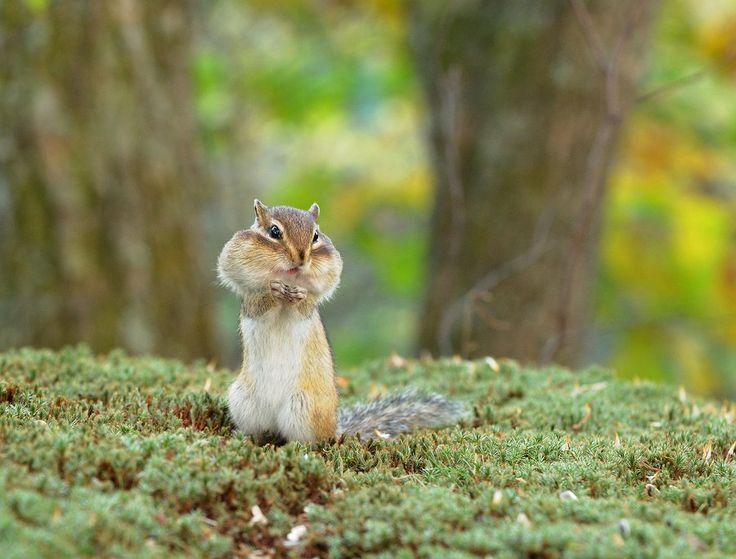 画像表示 - HIROAKIの野鳥アルバム - Yahoo!ブログ