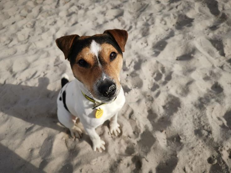 Looking at Flynn dogstrust rehomeadog Rehoming, Dog