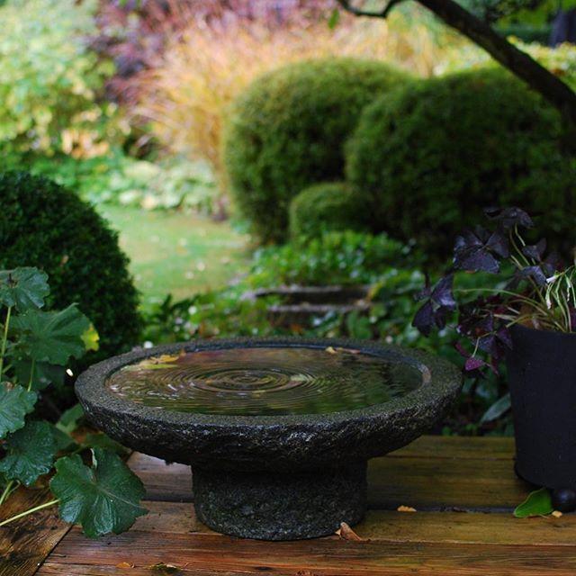 Tack för alla rara kommentarer om reportaget om min trädgård i Allt om Trädgård. Idag regnar det. Jag har planterat några lökar och stödvattnar det vintergröna. Nu ska hela familjen krypa upp i soffan och äta äppelkaka. Inte alls dumt😊. Ha en fin söndag!  A quiet rain today. Needed and welcome.  #alltomträdgård #höstpåalmbacken #oktoberpåalmbacken #gardeninspiration #gardendesign #trädgårdsdesign #trädgårdsdesigner #