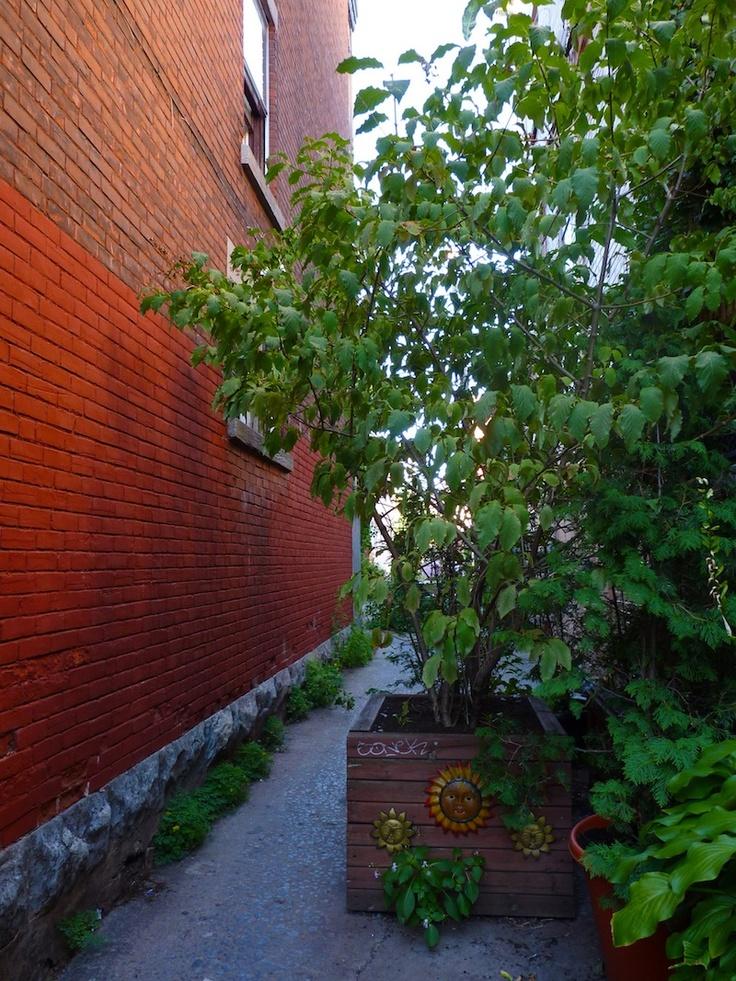 Les ruelles vertes de Montréal