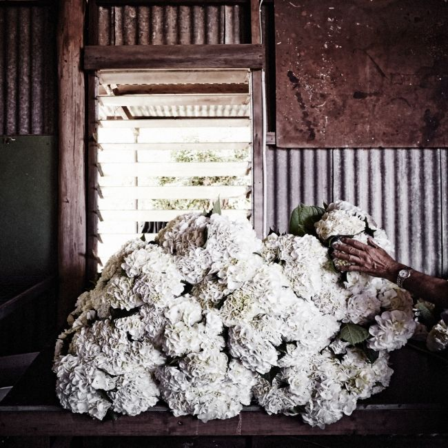 A new book gives an insight into what it�s like to be a floral artist - Vogue Living