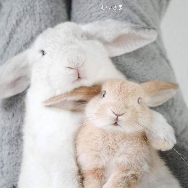 картинки обнимашки с зайцами если яркость света