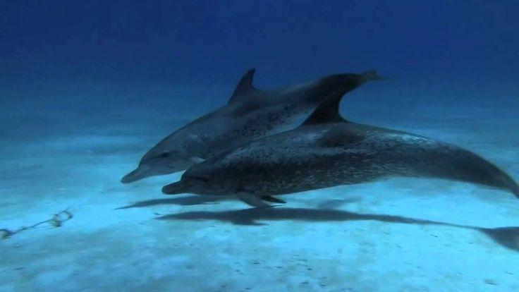 Дельфины и красивая музыка. Релакс. Для души