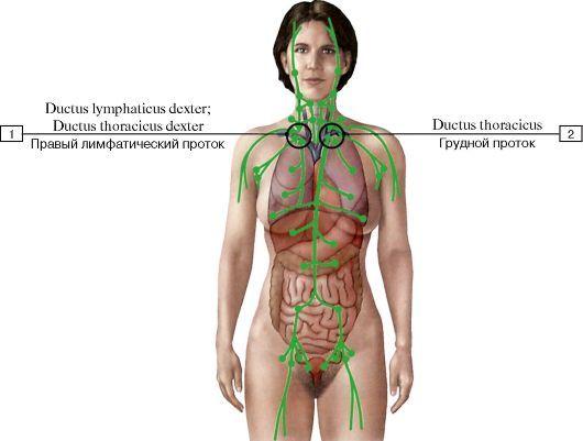 Отток лимфы от шеи, вид спереди (схема):