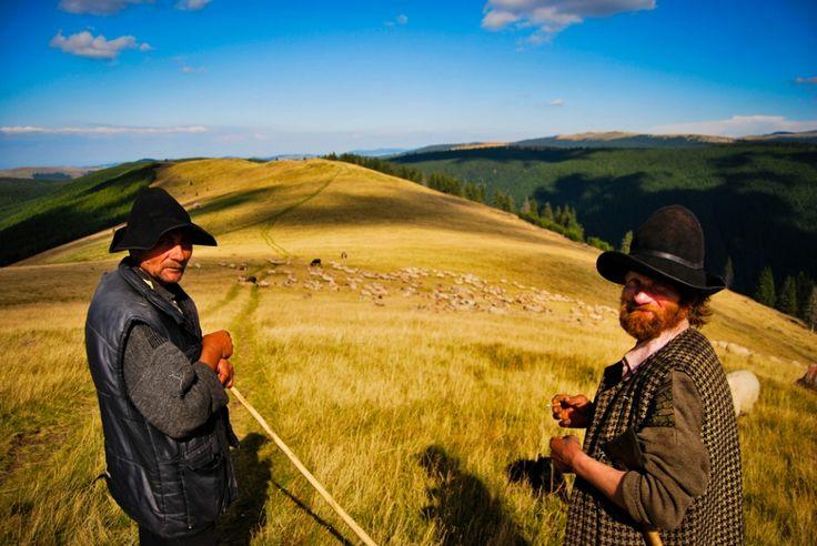 Ciobani cu oile la pascut