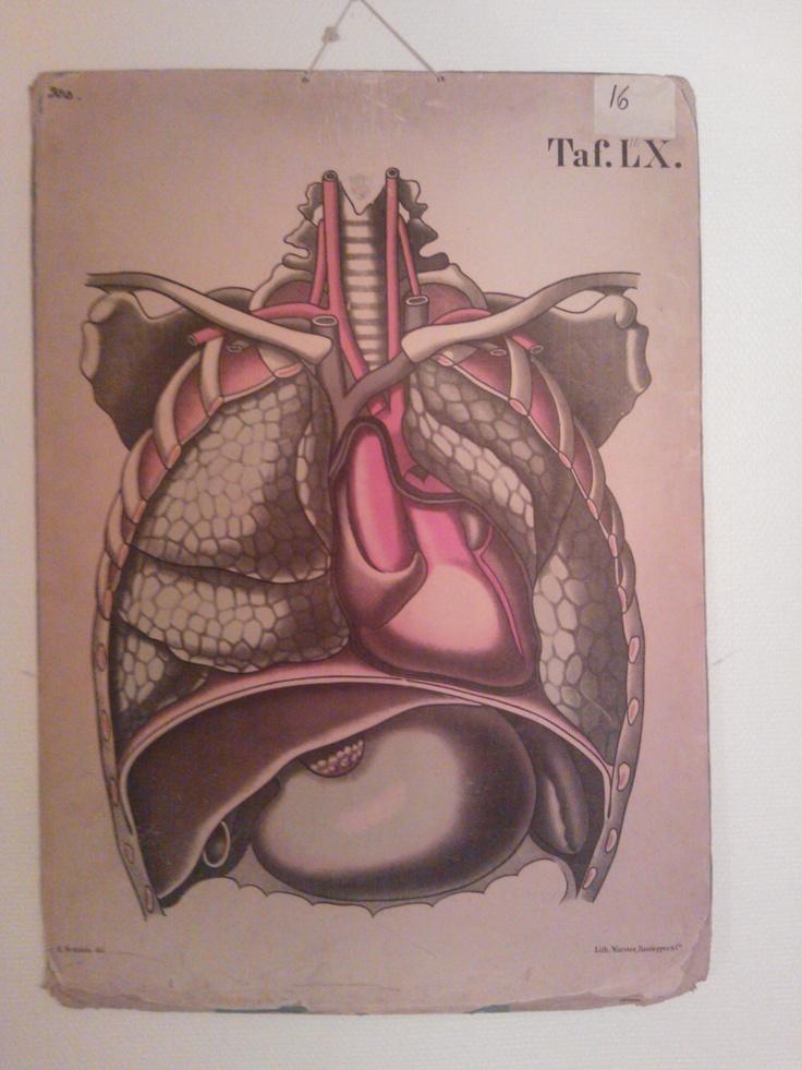 Anatomy.: Anatomy, Anatomical, Beautiful, Drawing