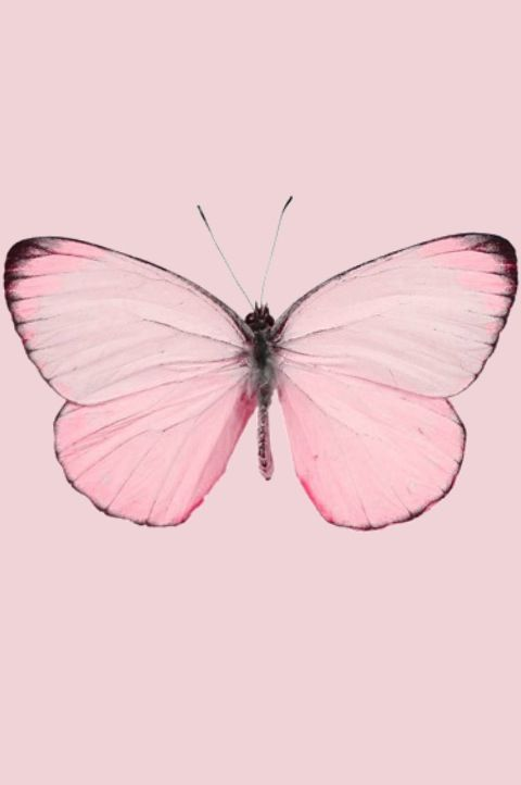 Light pale pastel pink butterfly moth insect nature iphone for Pale perfection paint