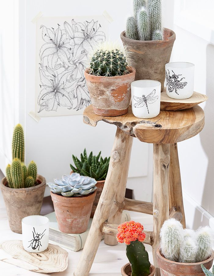 Succulents. Those botanical prints on translucent glass. The driftwood stool.