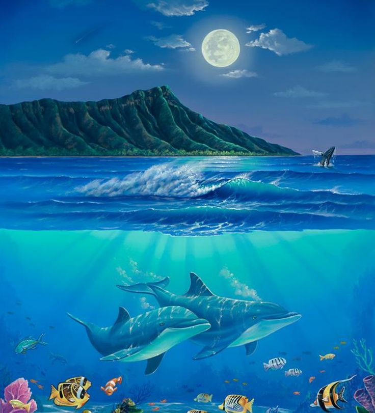 28 best images about murals on pinterest painting canvas for Dolphins paradise wall mural