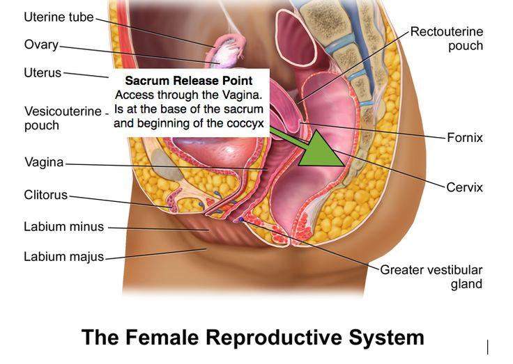 Urethral sounding
