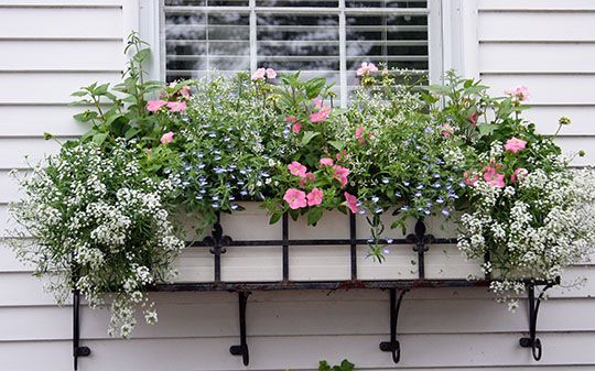 White, pink and blue is a favorite combination that is always attractive. Here Proven Winners plants including Snow Princess Alyssum, Diamon...