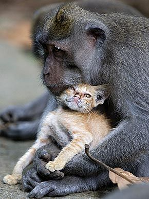 Warm Wishes! Cute Animals Cuddling - HANDS ON - Exotic Animals & Pets, Pet Photo Special : People.com