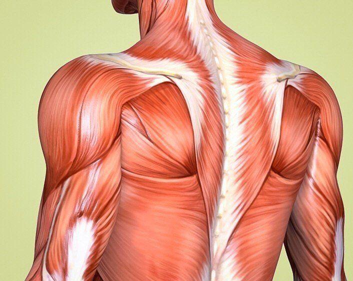 2 простых упражнения, которые помогут при болях в плечах
