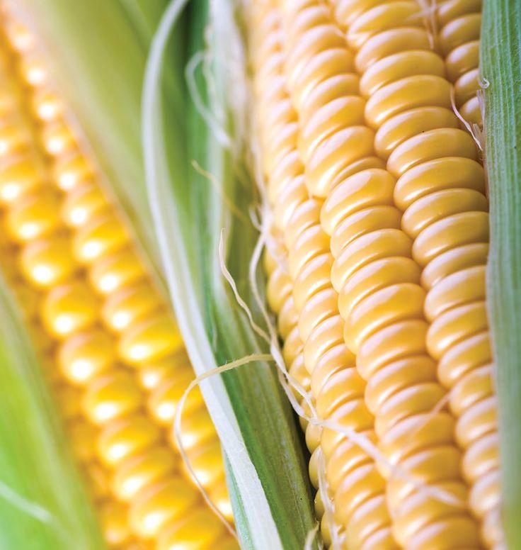 Sweet Corn Varieties Days To Maturity