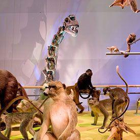 Naturalis, Ontdek het ontstaan en leven op aarde in de vaste tentoonstellingen van Naturalis. Wandel langs de Oerparade, beleef het Natuurtheater of neem een kijkje in de Schatkamer.