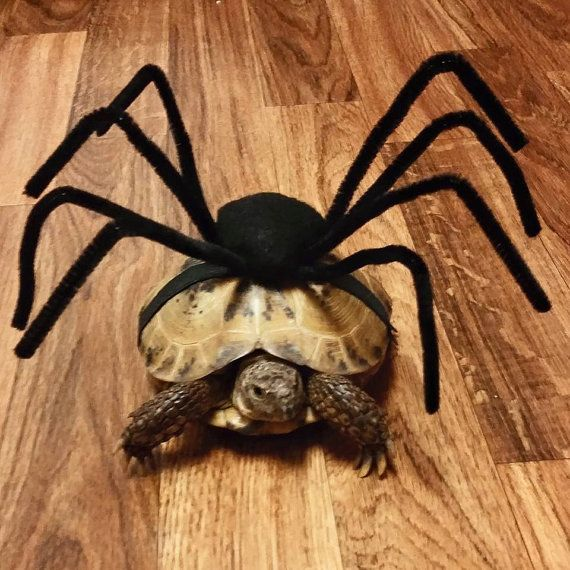 Pet+Tortoise+Costume+Pet+Costume+Tortoise+by+DeerwoodCreekGifts