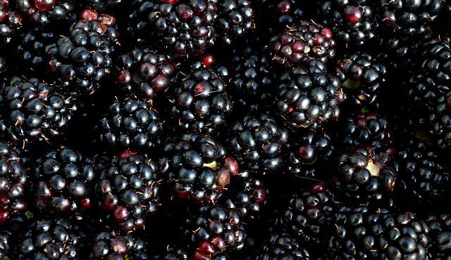 Powerful sun protective foods, Black berries, eggplant, red cabbage