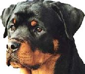 ROTTWEILER RESCUE OF LOS ANGELES, INC.