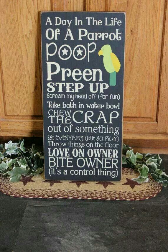 """Primitive """"A Day In The Life Of A Parrot"""" wood subway sign 12 x 24 - your color…"""
