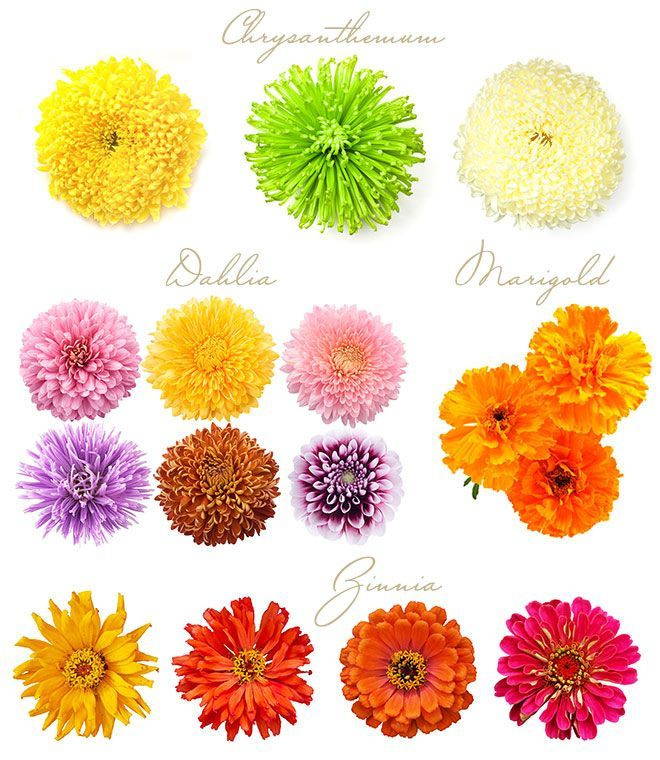 Wedding Flowers For November: What's In Season: A Guide To Fall Wedding Flowers