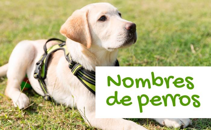 Nombres Para Perros Top 100 Más Bonitos Y Originales Nombres De Perro Hembra Nombres Para Perros Machos Nombres Para Perros Pitbull